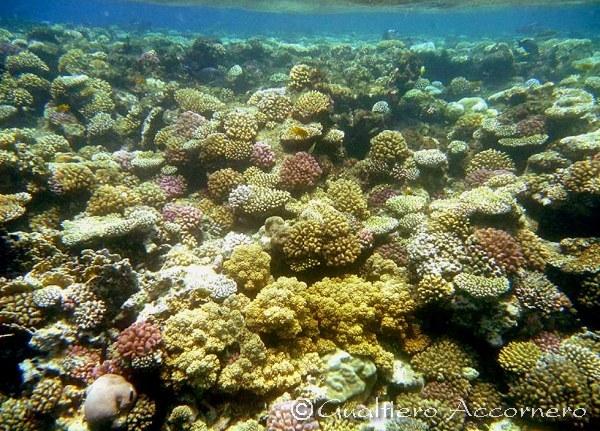 I Coralli Sono Animali Un giardino subacqueo ...